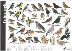 Zoekkaart Tuinvogels, leuk om te doen met kinderen Animal Plates, Garden Animals, Outdoor Classroom, Kinds Of Birds, Wild Nature, Flora And Fauna, Animals Of The World, Bird Watching, Natural History