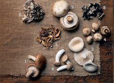 CONHEÇA OS TIPOS DE COGUMELOS Um rápido passeio pela variedade de cogumelos, dicas de como prepará-los e receitas