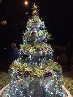 Succulent Christmas tree at Longwood Gardens. The picture doesn't do this justice. It's so beautiful!
