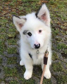 http://ift.tt/2q4fbfY meet my new roommate Beau Bear