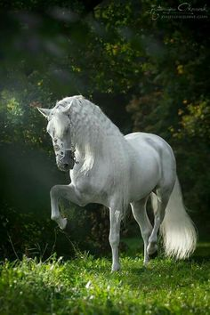 I'm usually not drawn to White Horses but this photo is BEAUTIFUL.