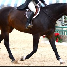 English riding... we post with English riding there's an art to getting ones foot right and knee right.... the fit if the human to the saddle and the saddle to the horse is very important