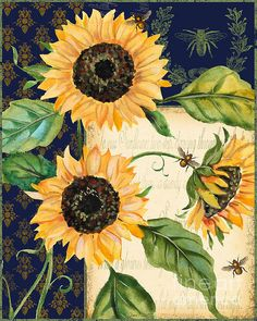 Sunflower Melody-a Print By Jean Plout