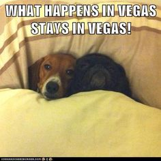 WHAT HAPPENS IN VEGAS STAYS IN VEGAS! - Funny pictures and memes of dogs doing and implying things. If you thought you couldn't possible love dogs anymore, this might prove you wrong. Funny Babies, Funny Dogs, Cute Dogs, Cute Baby Animals, Funny Animals, Cute Animal Quotes, Young Animal, Raining Cats And Dogs, Funny Dog Pictures