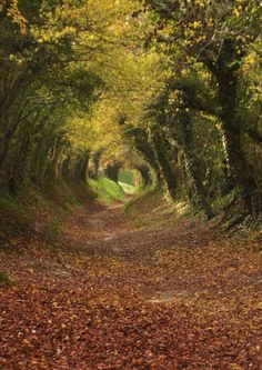 The Tree Tunnel Path to Halnaker Mill in West Sussex, England