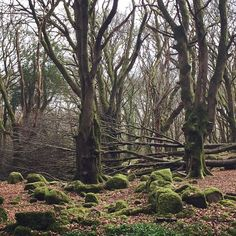 #barnawoods #galway #nature #forest #microadventure #loveireland Love Ireland, Adventure Travel, Country Roads, Nature, Plants, Life, Instagram, Naturaleza, Planters