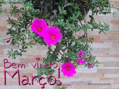 Bem vindo, Março! Traga somente coisas boas e sentimentos edificantes, para todos!