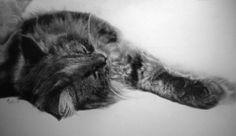 Котики от Пола Ланга (12 работ)