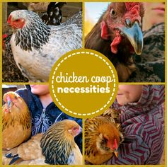 When building a chicken coop you need to keep in mind certain requirements...