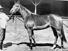 Duranza Named 1943 Co-Champion Filly (with Twilight Tear) After defeating the great filly Busher in the 1945 Beverly Handicap, Duranza met her again in a special match race. Race Horses, Horse Racing, Calumet Farm, Horse Names, Thoroughbred Horse, History, Champion, Animals, Blue