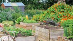Small Home Vegetable Garden Best Vegetable Garden Layout Ideas Vegetable Garden Planning, Home Vegetable Garden, Building Raised Garden Beds, Raised Beds, Landscaping Tips, Garden Landscaping, Gemüseanbau In Kübeln, Container Gardening Vegetables, Layout