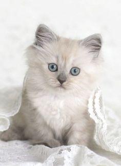 adorable chaton                                                       …
