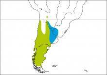 Species distribution range map for Common Diuca-finch (Diuca diuca)