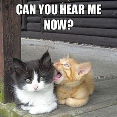 Funny cat memes and pictures - 54 pics animals кошачьи мемы, Funny Animal Jokes, Funny Cat Memes, Cute Funny Animals, Cute Baby Animals, Funny Cute, Funny Pics, Funny Videos, Funniest Animals, Easy Animals