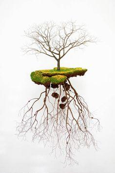 Tree Sculptures Connected to Cuban Artist's Roots – Fubiz Media