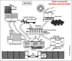 Cell City Analogy Worksheet Answer Key: Cell City Introduction ...