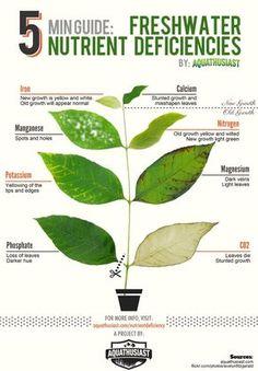 5 minute guide: Freshwater Nutrient Deficiencies in Plants
