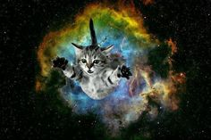 flying space cat