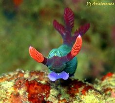 Unknown nudibranch!