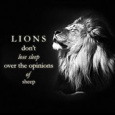 'Lions Don't Lose Sleep Over the Opinions of Sheep' by Encouragement Quotes, Wisdom Quotes, Me Quotes, Quotes About Haters, Quotes About Lions, Meaningful Quotes, Inspirational Quotes, Motivational, Lions Dont Lose Sleep