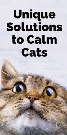 Fortunately, there are a number of drug-free products available to help calm down frazzled felines. Here's a look at a few unique - but quite effective - calming solutions for cats.