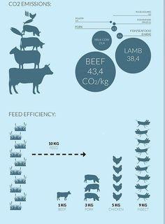 Ces fermes à insectes ultra modernes atteindront-elles leur objectif de vous convaincre de manger de la vermine? | Atlantico.fr Cricket Farming, Bug Food, Cricket Flour, Breeds Of Cows, Edible Insects, Goat House, Sustainable Food, Hobby Farms, Greenhouse Gases
