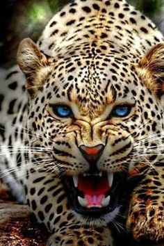 Snow Leopard Nature, Animals, Wildlife: The Beauty at one place Nature Animals, Animals And Pets, Baby Animals, Cute Animals, Fierce Animals, Animals Planet, Beautiful Cats, Animals Beautiful, Animals Amazing