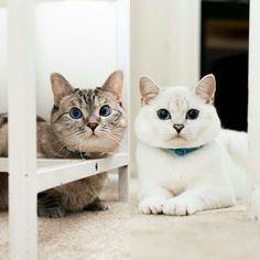 Me and my lovely little brother @white_coffee_cat_ #prayforcoffeecat www.nalacat.com