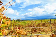 Winery Tours - The Best of Temecula Wine Country Holistic Health Coach, Wine Country, Vineyard, Healthy Living, Tours, Good Things, Adventure, Outdoor, Outdoors