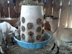 No mess goat feeder More
