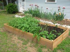 7 Common Mistakes of the Beginner Gardener  http://www.realfarmacy.com/7-common-mistakes-of-the-beginner-gardener/