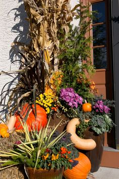 Decorating for Fall... | October 2015//By Sue Long//Photography by Nick Gould//Designs by Tim Arpin #falldecor #pumpkins #cornstalks #containergardens #squash #halloween #halloweendecor #thanksgiving #mums #gourds