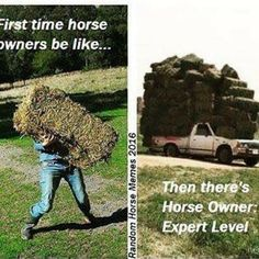 You know when people brag about how many grocery bags they can carry into… Funny Horse Memes, Funny Horse Pictures, Funny Horses, Cute Horses, Horse Love, Beautiful Horses, Funny Animals, Horse Humor, Beautiful Cats