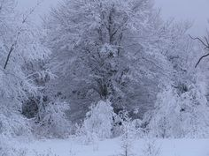 The beauty of our most recent storm,  here in N.S. Spectacular work of Mother Nature...(my backyard)