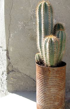 Cactuses have become increasingly popular as interior items. We love them too!