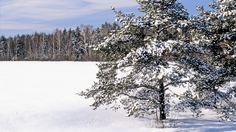 field_snow_snowdrifts_trees_4742_1920x1080.jpg (1920×1080)