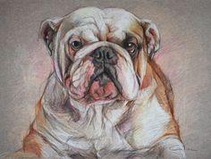 English Bulldog ART Pet Portrait Drawing by PETARTPortraits, $100.00