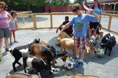 Naturally Weird Summer Camp Norfolk, Virginia  #Kids #Events