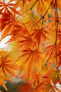 Fall Pictures, Fall Photos, Golden Leaves, Autumn Leaves, Color Inspiration, Seasons, Photo And Video, Nature, Painting Art