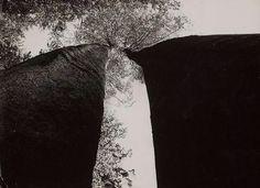 Martin Martinček - Trees, 1978 Big Tree, Tumblr, Nature, Trees, Serendipity, Masters, Flora, Nostalgia, Film