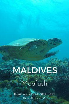 Maafushi Maldives - How We Spent Our Days Visit Maldives, Maldives Travel, Travel With Kids, Family Travel, Marine Archaeology, Sri Lanka, Maldives Destinations, Snorkelling, Travel Guides