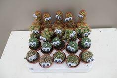 Funky Cactus Friend - Best4Garden Online Gift Plants Unique Presents, Online Gifts, House Plants, Cactus, Succulents, Indoor House Plants, Foliage Plants, Succulent Plants, Houseplants