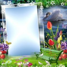 Banner Background Images, Flower Background Wallpaper, Photo Background Images, Frame Background, Flower Backgrounds, Picture Borders, Blue Butterfly Wallpaper, Foto Frame, Dove Pictures