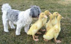 Quacker alert!