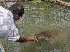 Black River Safari Boat Tour - Boat Ride Crocodile Adventure Tour. - $88.00