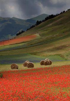 Fields around Castelluccio di Norcia in full bloom, Umbria, Italy
