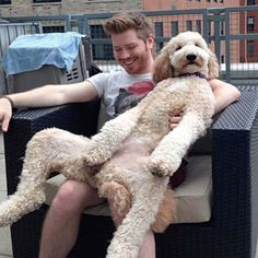 18 Massive Dogs That Think They're Still Puppies