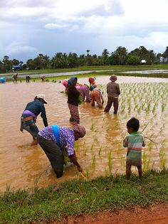 Cambodia. SE Asia travel, backpacking SE Asia. Things to do and things to see in Kampot and Kep, Cambodia. People in Cambodia, life in Cambodia.