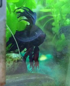 My Betta Fish Fish Tales, Betta Fish, Pets, Animals, Animales, Animaux, Animal, Animais, Animals And Pets