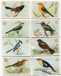 Set of 8 1915 Arm and Hammer Birds of by kelleystreetvintage